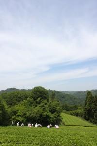 2013.5.31 摘み手 茶(チャ)―ルズ 井口山