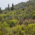 自然と同化している完全な自然栽培の茶山