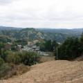 移植先の南東向き斜面の茶園(2008年3月 長引・宮山)