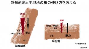 急傾斜地と平坦地の根の伸び方を考える
