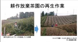 耕作放棄茶園の再生作業